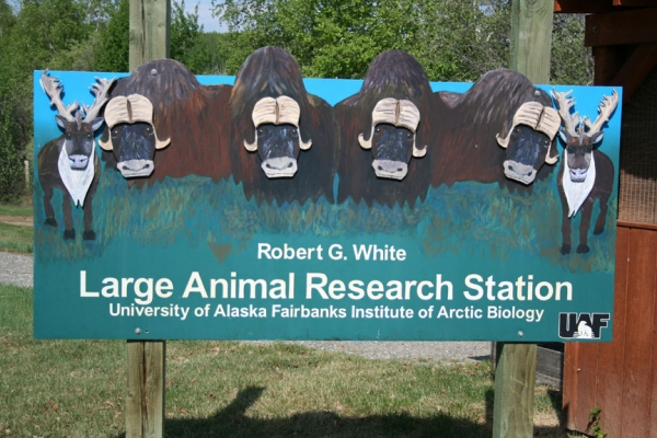 Large Animal Research Station Fairbanks